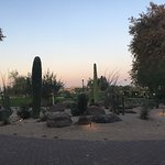 one of the many desert gardens on the grounds
