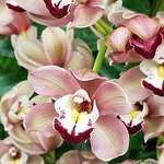 Photo de Cleveland Botanical Garden