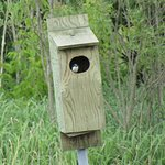 The bird inside the bird house