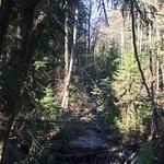 LV Trails
