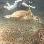 Phi Phi Dive