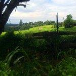 lush, pastoral kenyan countryside