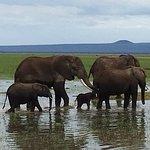 Foto de Amboseli National Park