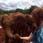 Making friends with a baby elephant!