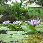 Foto de Les Jardins de Valombreuse Parc Floral et de loisirs