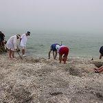 Photo of Blind Pass Beach