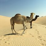 Photo of Desert Rose Tourism - Day Tours
