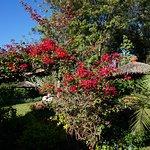 Hình ảnh về Kibo Slopes Garden Resort