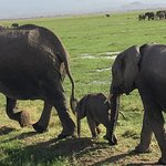 Foto de Amboseli National Park