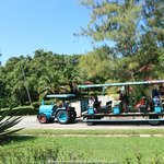 Shuttle trains - free rides within the park compound