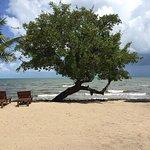 The beach at Driftwood