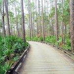 raised cart path through the wetlands - lovely