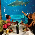 Fine dining with the sharks