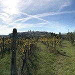 View from a vineyard in Sam Gimignano