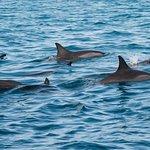 Nos amis les Dauphins dans leurs habitat naturelle