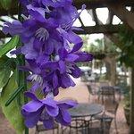 Photo de Florida House Inn