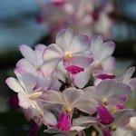 Malgré tout quelques belles orchidées