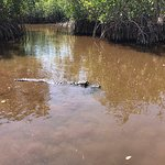 Photo de Capt Mitch's - Everglades Private Airboat Tours