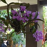 Orchids of the Pura Vida restaurant
