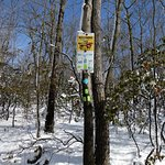 Foto de Norvin Green State Forest