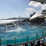 Photo of Kamogawa SeaWorld