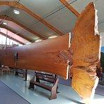 The Kauri Museum Foto