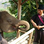 Photo of Ran-Tong Save & Rescue Elephant Centre