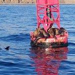 Foto de Capt. Dave's Dolphin & Whale Watching Safari