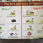 Photo de Tiger Kingdom Chiang Mai
