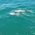The small and endangered Hector's Dolphin. What a privilege to see them!