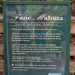 Tane Mahuta Walk
