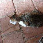 la Casa de las Empanadas Cafayate el gato se llama empanadas