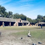 The stable-yard, complete with guinea hens and geese.