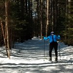 Beautiful groomed trails in wood.
