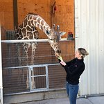 Feeding the giraffe was so fun