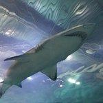 Shark above