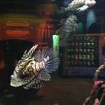 Foto di SEA LIFE Melbourne Aquarium