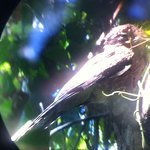 Baby hawk in a raindrop (lens effect), Manuel Antonio National Rain-forest