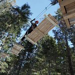 TimberTop Adventures - Family fun and games in the trees at Dominion Park