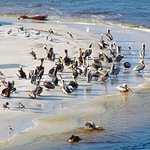 these are the pelicans across from the resort (telephoto lens) from the resort. We also saw dolp
