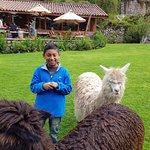 """Mi hijo Máximo junto a las alpacas """"Apu"""" y """"Killa"""""""