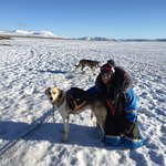 Photo of Dogsledding Iceland