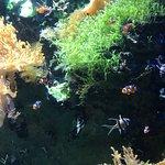 Grand Aquarium Foto