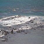 Billede af Hanauma Bay Nature Preserve
