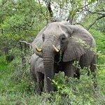 Bild från Kapama Southern Camp