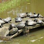 Bosque Guarani zoo Foto