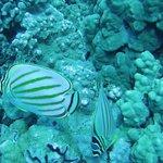 Great Reef Diving