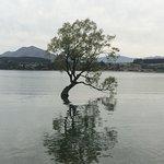 Wanaka Tree - Just a short walk from lodge on shore