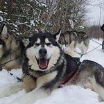 Photo of Entre chien et loup