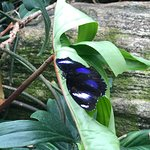 Niagara Parks Butterfly Conservatory Photo